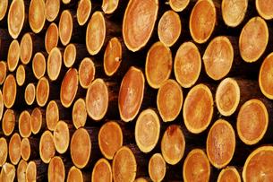 積み上げけられた木材の断面の写真素材 [FYI01489416]