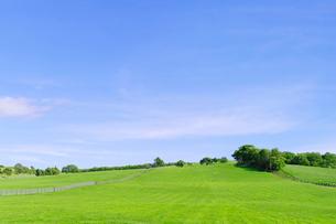 緑の牧場の丘と青空の写真素材 [FYI01489428]