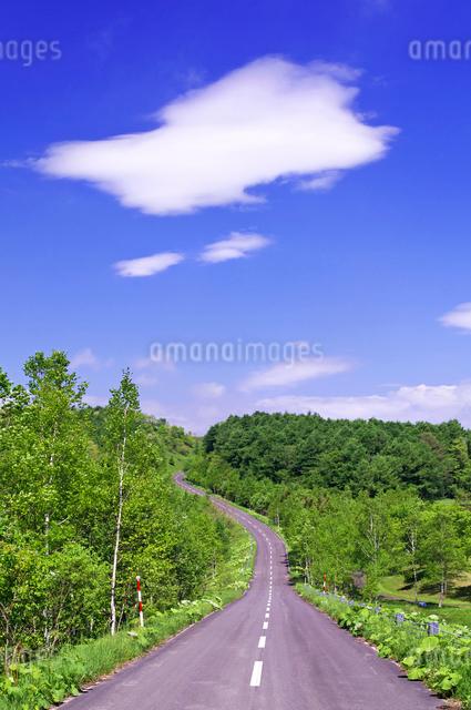 新緑の山の道路の写真素材 [FYI01489561]