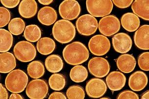 積み上げけられた木材の断面の写真素材 [FYI01489597]