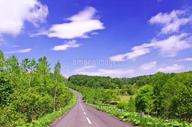 新緑の山の道路の写真素材 [FYI01489758]