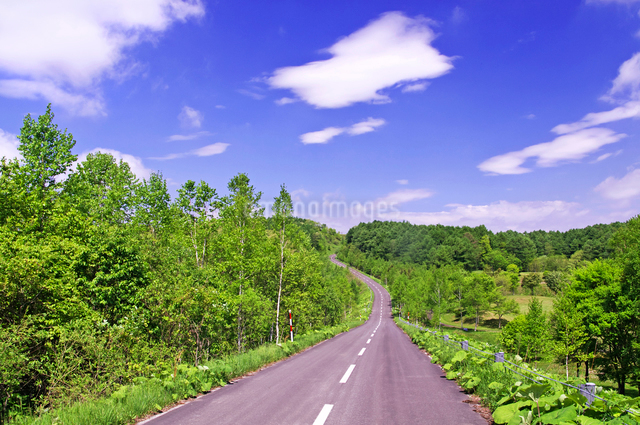 新緑の山の道路の写真素材 [FYI01489797]