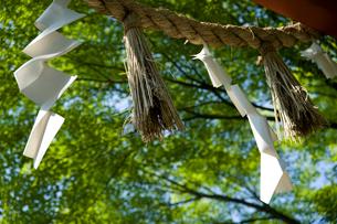 緑の木々と風になびくしめなわの写真素材 [FYI01489806]