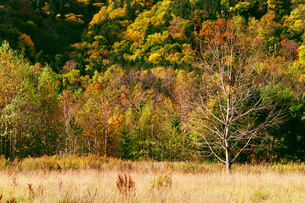 山岳地帯の秋景色の写真素材 [FYI01489976]