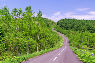 新緑の山林と道路の写真素材 [FYI01489978]