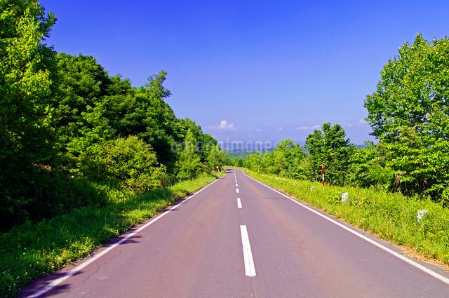 新緑の山の道の写真素材 [FYI01490040]
