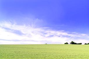 初夏の小麦畑の丘と雲の写真素材 [FYI01490109]