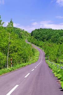 新緑の山林と道路の写真素材 [FYI01490208]