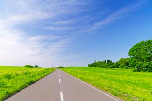 牧草地の丘の一本の道の写真素材 [FYI01490251]