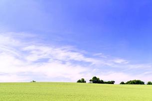 初夏の小麦畑の丘と青空の写真素材 [FYI01490266]