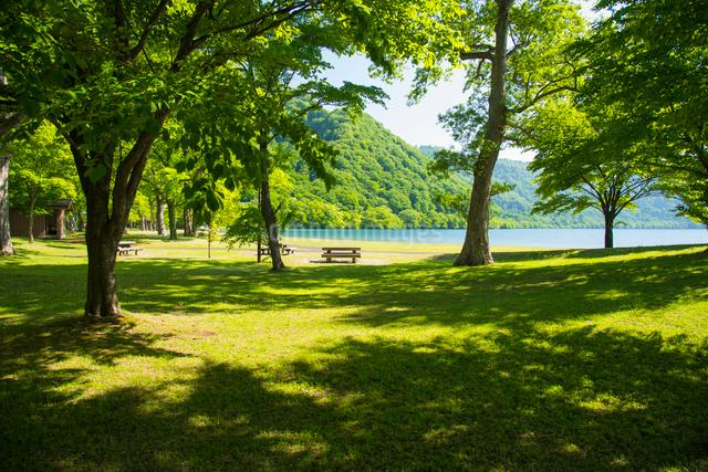 新緑の十和田湖湖畔の写真素材 [FYI01490372]