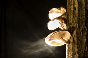 シイタケの胞子飛散の写真素材 [FYI01490982]