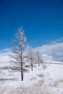 冬の霧ヶ峰高原の写真素材 [FYI01491563]