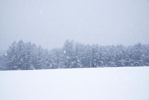 針葉樹林雪景色の写真素材 [FYI01491940]
