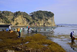 房総のヒジキ狩り吉尾港沖の写真素材 [FYI01492144]