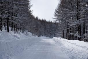 雪の霧ヶ峰ビーナスラインの写真素材 [FYI01492672]