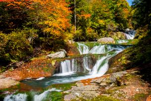 蓼科中央高原横谷渓谷紅葉のおしどり隠しの滝の写真素材 [FYI01492729]