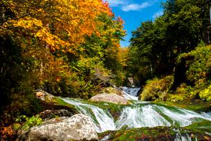 蓼科中央高原横谷渓谷紅葉のおしどり隠しの滝の写真素材 [FYI01492770]