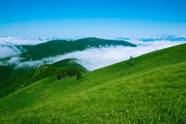三峰山より草原と雲海に浮かぶ北アルプス連峰の写真素材 [FYI01492808]