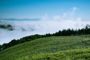 三峰山より望む雲海と八ヶ岳連峰の写真素材 [FYI01492856]