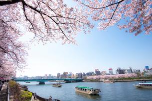屋形船浮ぶ隅田川と桜の写真素材 [FYI01493005]