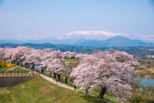 蔵王連峰と白石川堤一目千本桜の写真素材 [FYI01493021]