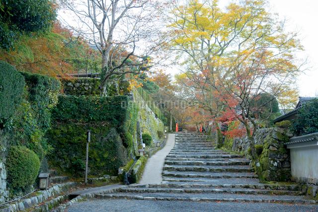 京都大原朝霧の朝の写真素材 [FYI01493054]