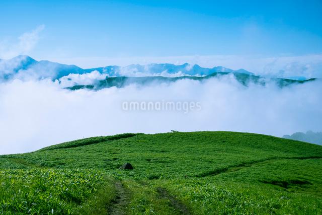 三峰山より望む雲海と八ヶ岳連峰の写真素材 [FYI01493096]