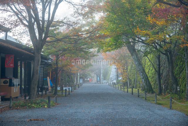京都大原朝霧の朝の写真素材 [FYI01493141]