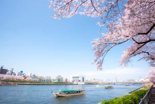 屋形船浮ぶ隅田川と桜咲く墨田公園の写真素材 [FYI01493271]