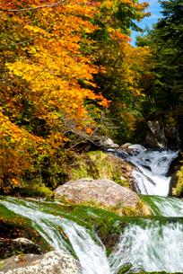 蓼科中央高原横谷渓谷紅葉のおしどり隠しの滝の写真素材 [FYI01493281]