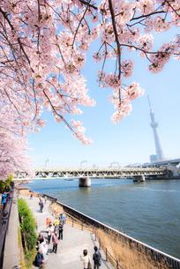桜咲く墨田公園より隅田川・東京スカイツリーの写真素材 [FYI01493367]