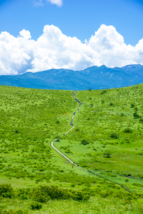 霧ヶ峰高原若草の草原の一本道と八ヶ岳連峰に夏雲の写真素材 [FYI01493371]