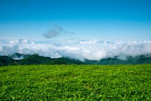三峰山より望む雲海とアルプスの写真素材 [FYI01493389]