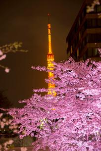 東京ミッドタウン,ライトアップの桜と東京タワーの写真素材 [FYI01493493]