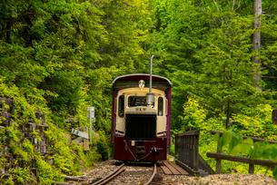 赤沢自然休養林 森林鉄道の写真素材 [FYI01493531]