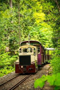 赤沢自然休養林 森林鉄道の写真素材 [FYI01493624]