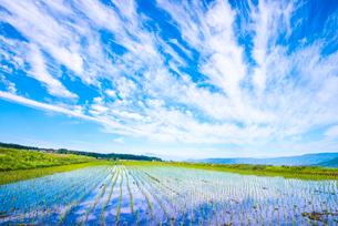 空の表情映す田植えの済んだ水田の写真素材 [FYI01493686]