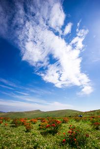 レンゲツツジ咲く霧ヶ峰高原車山肩と高原の空の写真素材 [FYI01493707]