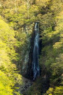 八滝の写真素材 [FYI01493725]