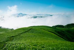 三峰山稜線と雲海に浮かぶ八ヶ岳連峰霧ヶ峰高原の写真素材 [FYI01493765]