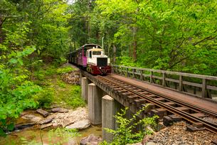 赤沢自然休養林 森林鉄道の写真素材 [FYI01493766]