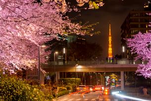 東京ミッドタウン,ライトアップの桜と東京タワーの写真素材 [FYI01493785]