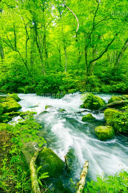 奥入瀬渓流 の写真素材 [FYI01493920]