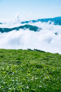 三峰山より望む雲海と信州の山々の写真素材 [FYI01493966]