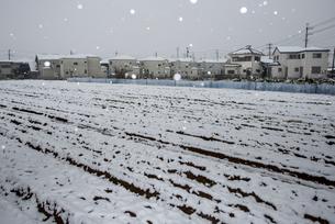 千葉県11月観測史上初の積雪の写真素材 [FYI01494248]