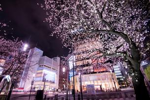 銀座数寄屋橋交差点より銀座の夜景と夜桜の写真素材 [FYI01494254]