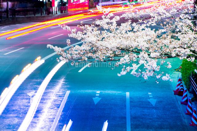 満開の桜と虹色の内堀通りの写真素材 [FYI01494269]