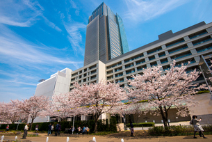 サクラ満開の東京ミッドタウンの写真素材 [FYI01494376]