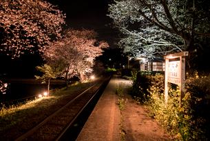 夜の飯給駅ホームと満開の桜の写真素材 [FYI01494514]